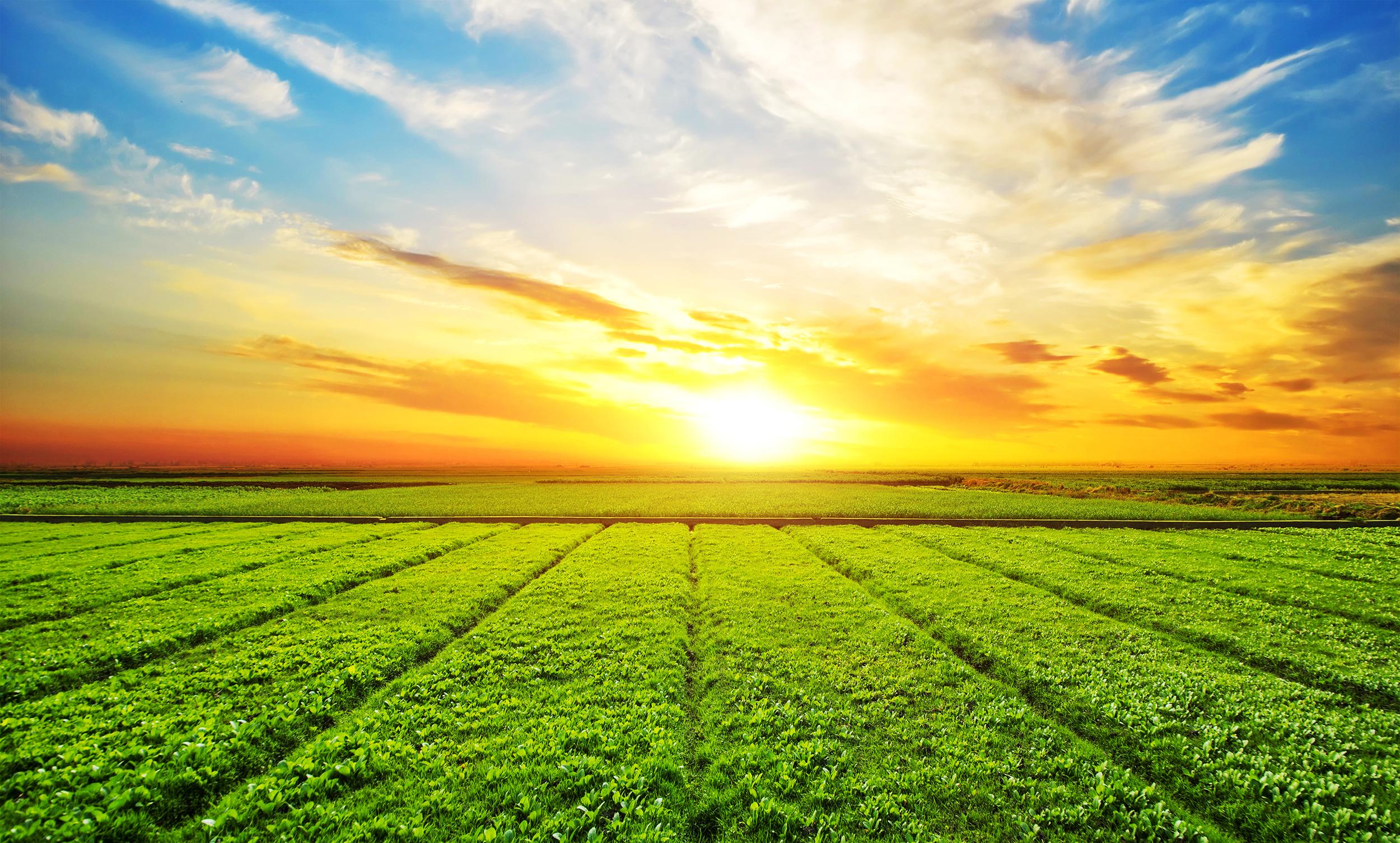 Prensa. De la tierra al consumidor. Auren anuncia la creación de una plataforma de servicios 360 en agribusiness